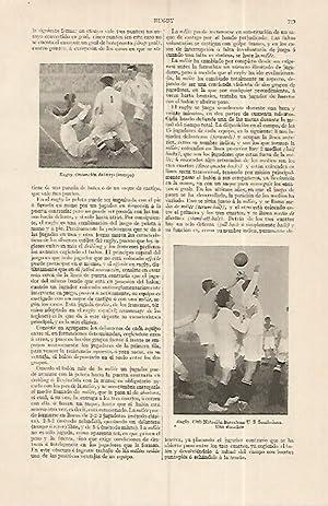 LAMINA ESPASA 19337: Club Natacion Barcelona de: Varios