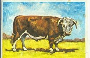 Cromos: Historia Natural numero Zoologia, cromo fuera: Varios