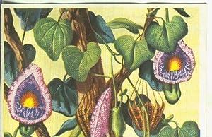 Cromos: Historia Natural numero Botanica, cromo fuera: Varios