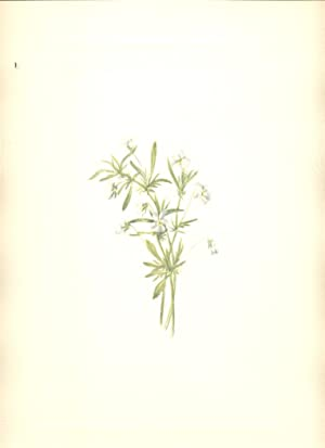Field Violet North American Wild Flowers- Volume: Walcott, Mary Vaux