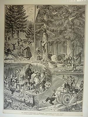 Orig. Holzstich - Bäume - Das Sammeln der Tannenzapfen im Schwarzwald