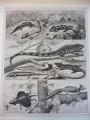 Orig. Holzstich - Reptilien - Henry Winkles sculp. 59.