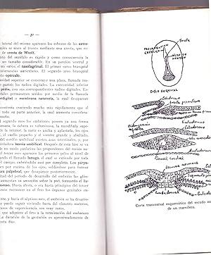 RESUMEN DE UN CURSO DE EMBRIOLOGIA GENERAL: Doctor Martin Sanchez