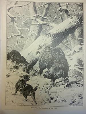 Orig. Holzstich - Schwarzwild - Gestellter Keiler. Nach dem Gemälde von C. F. Deiker.