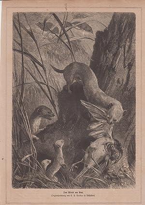 Orig. Holzstich: Das Wiesel am Bau. Originalzeichnung von C. F. Deiker in Düsseldorf.