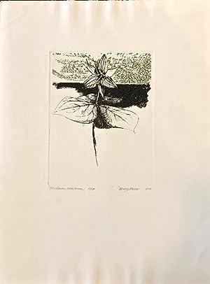 Trillium erectum (from Seven Flowers): Barry Moser