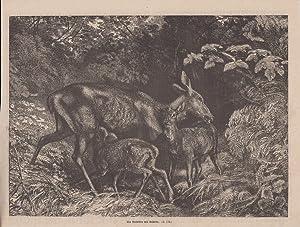 Orig. Holzstich: Ein Roththier mit Kälbern.