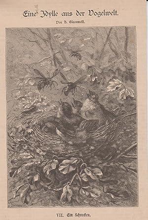 Orig. Holzstich: Eine Idylle aus der Vogelwelt. Nummer VII. Ein Schrecken. Von H. Giacomelli. Mit ...
