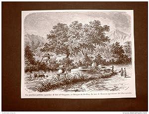 Immagine del venditore per In Giappone nel 1863 Giardino pubblico o di thè Disegno di De-Bon venduto da LIBRERIA IL TEMPO CHE FU