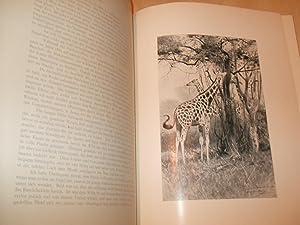 In Den Wildnissen Afrikas Und Asiens: Wissmann Dr V.