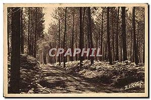 Carte Postale Ancienne Paysages landais Chemin Muletier