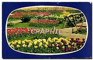 Carte Postale Moderne Holland in bloementooi Fleurs