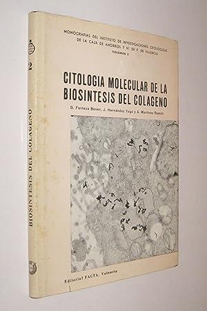 CITOLOGIA MOLECULAR DE LA BIOSINTESIS DEL COLAGENO: FORTEZA BOVER