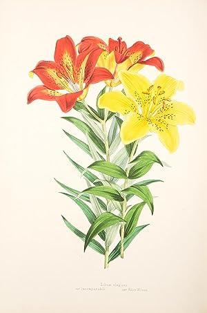 A Monograph of the Genus Lilium .: ELWES, Henry John