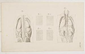 Anatomische Tafeln: Die Lage der Eingeweide der: Loder, Justus Christian