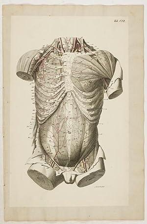 Anatomische Tafeln: Loder, Justus Christian