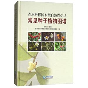 Common seed plant in the Chishui Alsophila: WU HONG YING