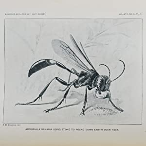 "On the Instincts and Habits of the Solitary Wasps. [Bound together with] ""Additional Observations..."