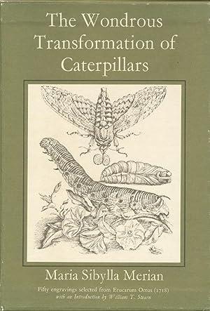 The Wondrous Transformation of Caterpillars.: MERIAN, Maria Sibylla.