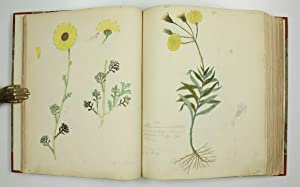 Botanical manuscript on paper.