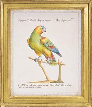Bild des Verkäufers für A Group of Six Parrots zum Verkauf von Shapero Rare Books