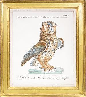Bild des Verkäufers für A Group of Six Owls. zum Verkauf von Shapero Rare Books