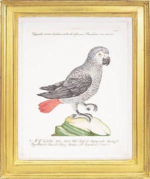 Bild des Verkäufers für Two Parrots zum Verkauf von Shapero Rare Books