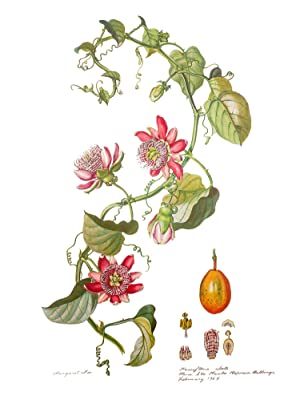 Flowers of the Brazilian Forests Collected and: MEE, Margaret Ursula.