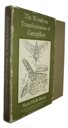 The Wondrous Transformation of Caterpillars: Merian, Maria Sybilla