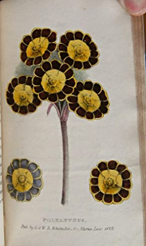 A Concise and Practical Treatise on the growth and culture of the carnation, pink, auricula, poly...