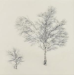 Two Silver Birches, Tokachidake, Hokkaido, Japan, 2007: Michael Kenna (1953)