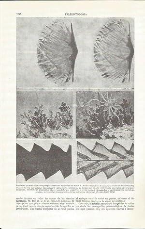 LAMINA ESPASA 37340: Paleontologia: Varios