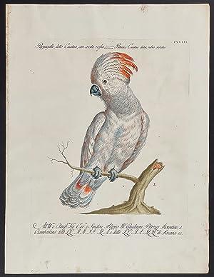 Bild des Verkäufers für Cockatoo zum Verkauf von Trillium Antique Prints & Rare Books