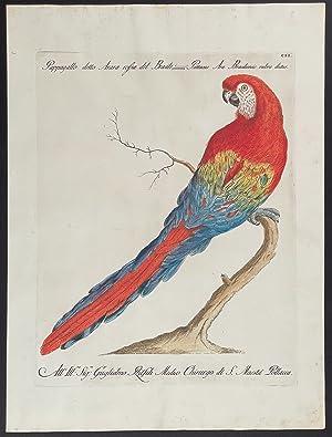 Bild des Verkäufers für Red & Blue Macaw zum Verkauf von Trillium Antique Prints & Rare Books