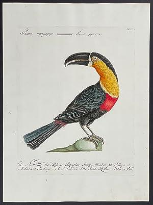 Bild des Verkäufers für Toucan zum Verkauf von Trillium Antique Prints & Rare Books