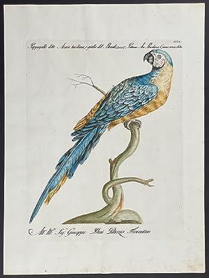Bild des Verkäufers für Blue & Yellow Macaw zum Verkauf von Trillium Antique Prints & Rare Books