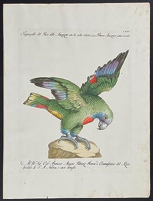 Bild des Verkäufers für Parrot zum Verkauf von Trillium Antique Prints & Rare Books