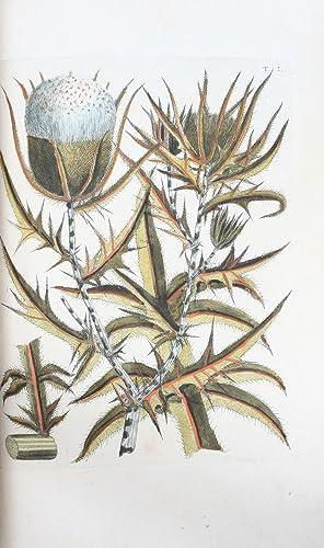 Flora Pedemontana, sive Enumeratio Methodica Stirpium Indigenarum: ALLIONI, CARLO. -