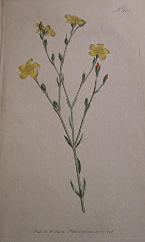 ORIGINAL HAND-COLOURED COPPER ENGRAVING - Linum Africanum: Curtis, William