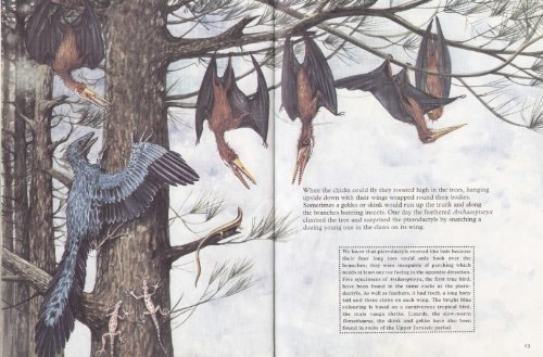 9780001041240: A Pterodactyl: The Story of a Flying Reptile
