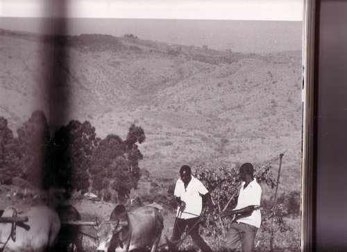 The Book of Kenya: Cubitt, Gerald S.,