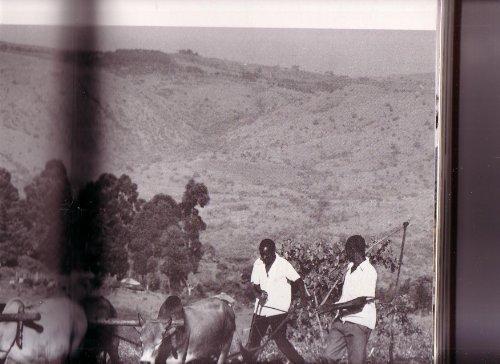 9780002160445: The Book of Kenya