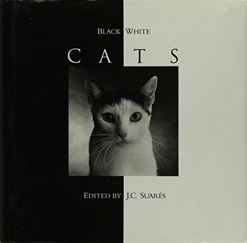 9780002550567: Black & White Cats