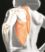 9780007044986: Human Anatomy- Text Only