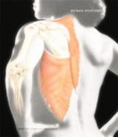 9780007051120: Human Anatomy- W/CD