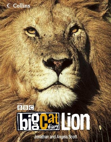 9780007211791: Big Cat Diary: Lion