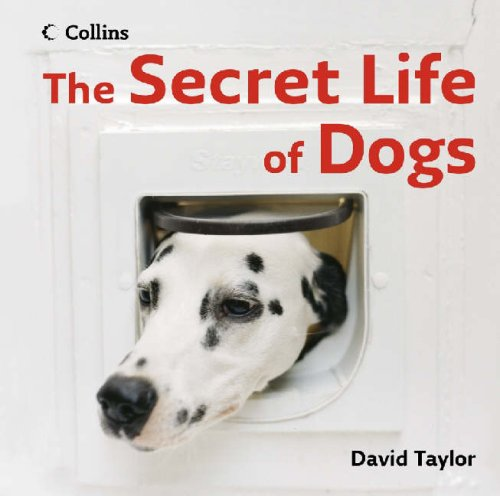 9780007244768: The Secret Life of Dogs