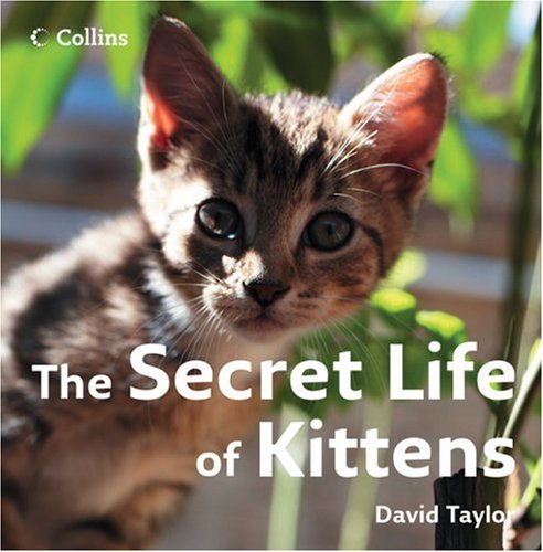 9780007263608: The Secret Life of Kittens
