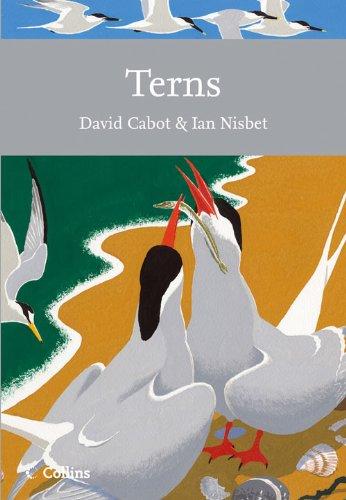 Terns: David Cabot