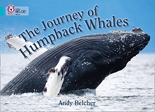 9780007461820: Collins Big Cat - The Journey of Humpback Whales: Band 07/Turquoise